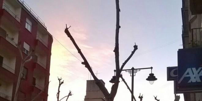 El Ayuntamiento acomete la poda de árboles