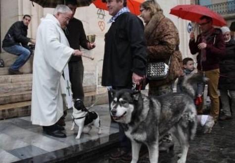 Alcoy celebrará Sant Antoni