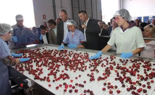 Los productores de Cereza auguran una reducción de la cosecha