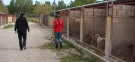 El PP defiende que Alcoy prohiba el sacrificio de animales abandonados o peligrosos