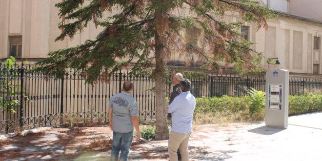 El Ayuntamiento de Alcoy se encargará del jardín del CADA