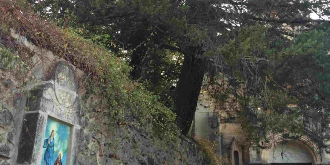 Compromis pide conservar un ciprés centenario en la Font Roja