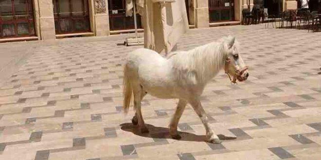 Expedientan al dueño de un poni que andaba suelto por las calles de Alcoy