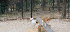 Guanyar no comparte la gestión para implantar las pruebas de ADN a mascotas