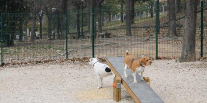 El PP propone un Plan para evitar nuevos envenenamientos de perros