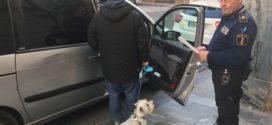 El PP asegura que el Ayuntamiento pagará finalmente la publicidad del ADN canino