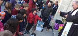 Cocentaina también celebra la fiesta de Sant Antoni del Porquet