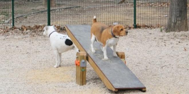 El PP de Alcoy cuestiona la gestión del ADN canino