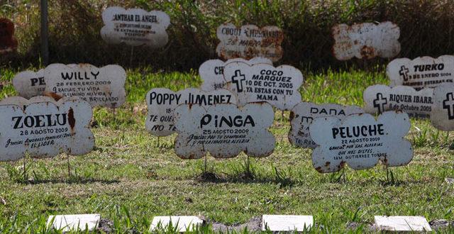 Compromís plantea un espacio municipal para enterrar mascotas