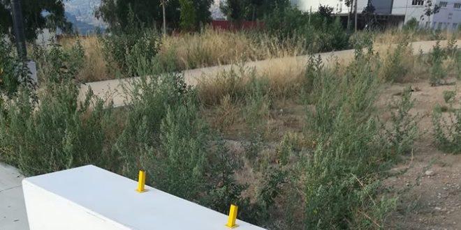 Malas hierbas Cotes Baixes