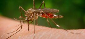 Alcoy ha iniciado este verano una nueva campaña para prevenir el Mosquito Tigre