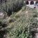 Ciudadanos alerta del mal estado de la zona de 'Els Llançols'
