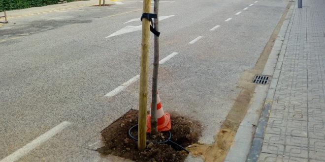 Muro planta nuevos árboles en varias calles del municipio